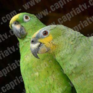 fotos aves y pajaros